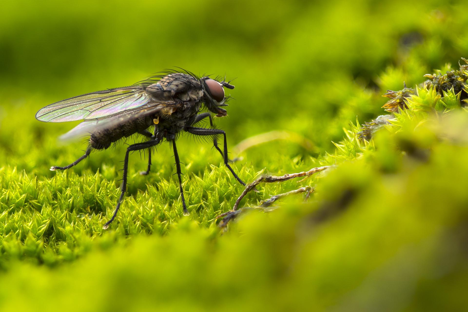 Insektenfalle Leimfalle Klebefalle Fliegenfänger Fliegen Hygienisch Ungeziefer